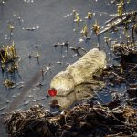 A plastic bottle polluting a river in Europe.