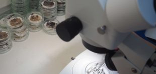 microplastic analysis microscope