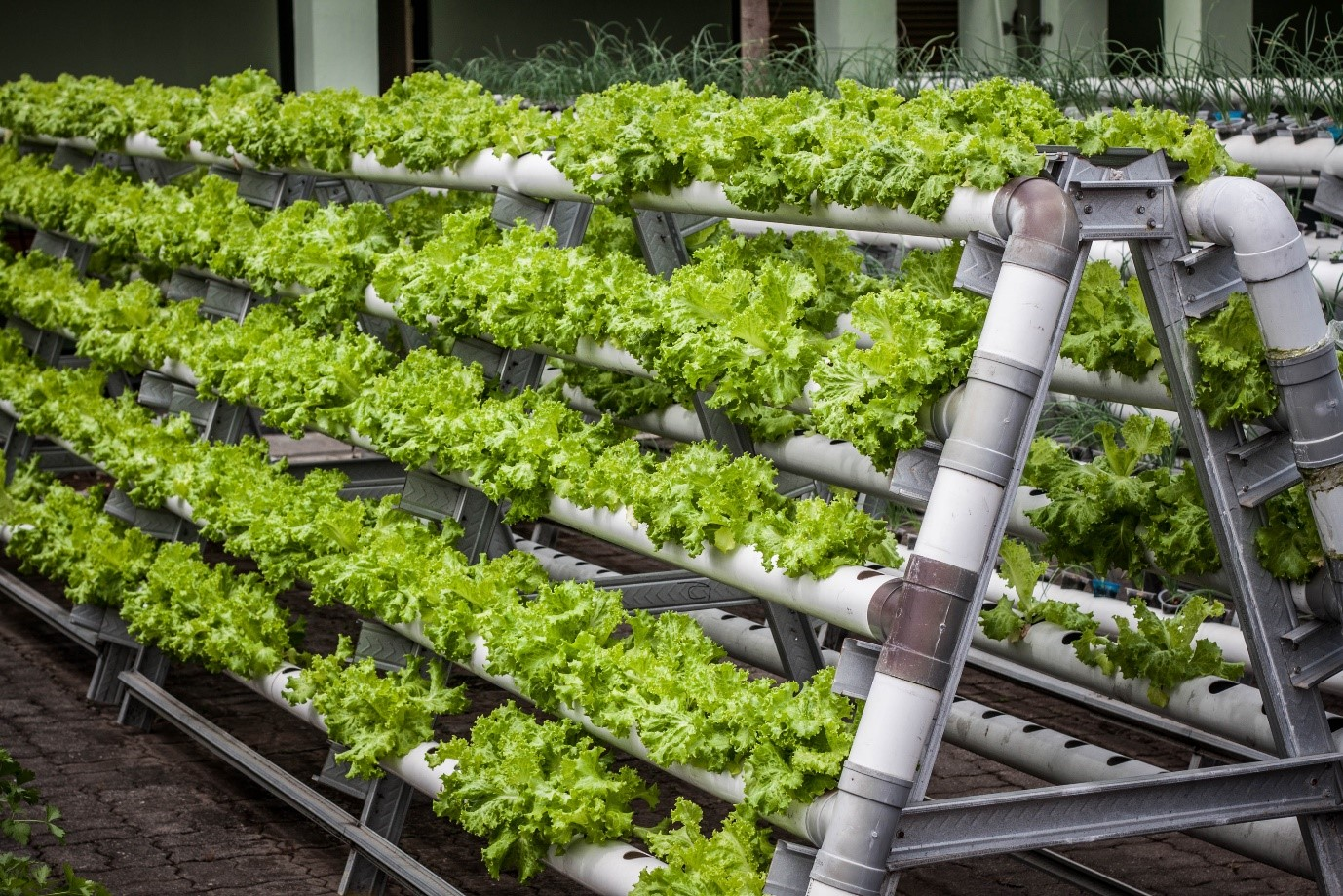 How Vertical Farms Could Change Our Future